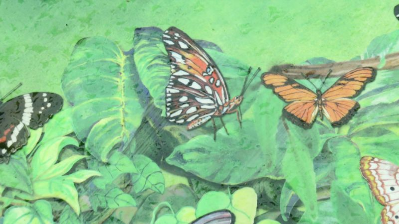 Butterflies of Mexico and the Day of the Dead